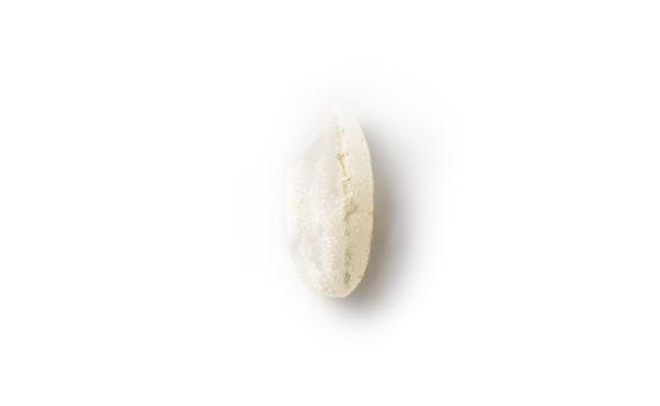 Carnoli